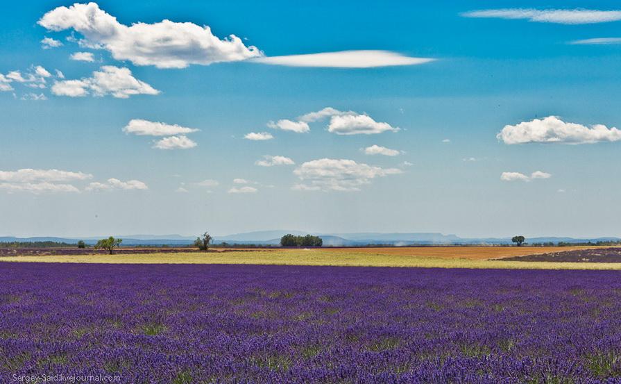 1623 А в Провансе лавандовые поля цветут