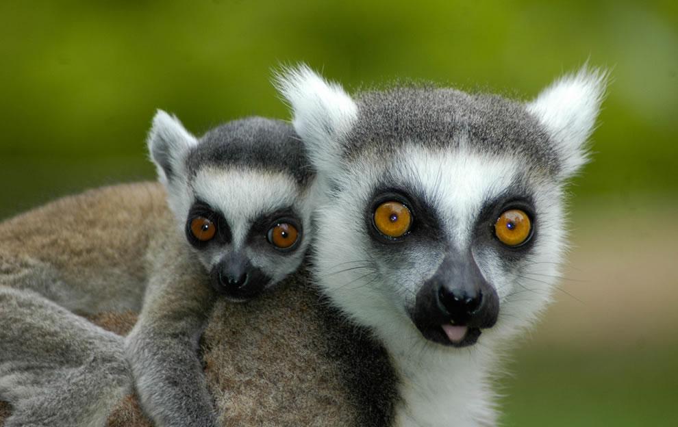 172 Животный мир: Мамина любовь