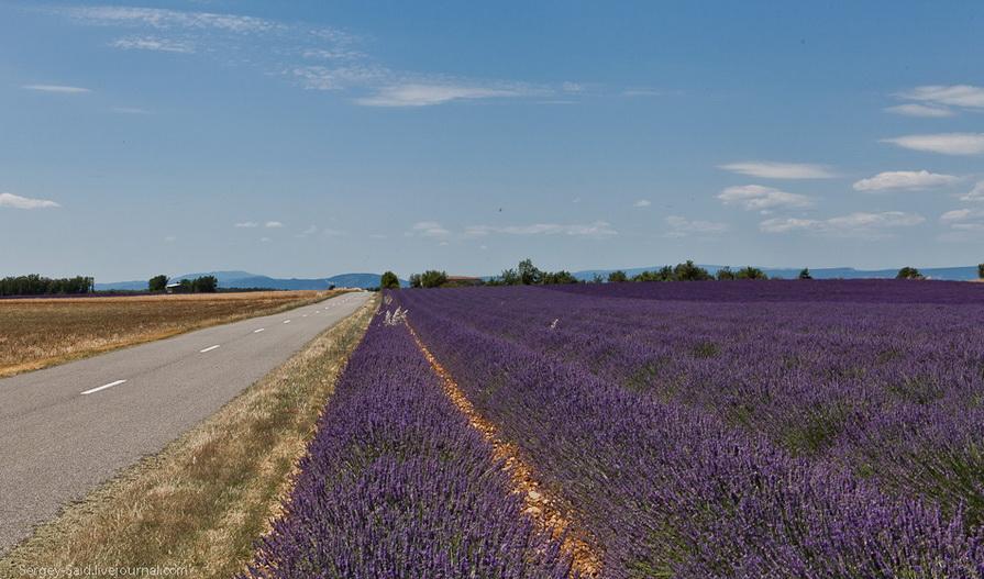 1723 А в Провансе лавандовые поля цветут
