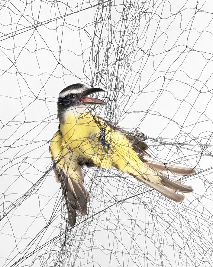 180 Доставка птицы