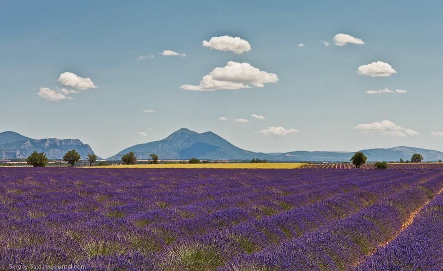 1823 А в Провансе лавандовые поля цветут