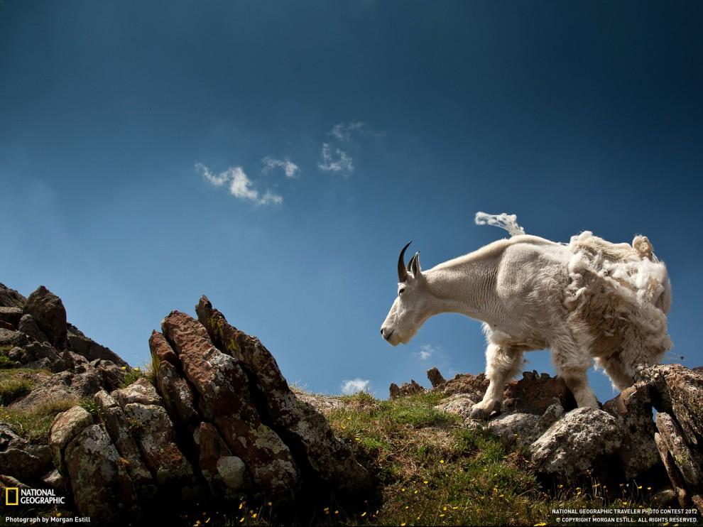 191 990x742 Обои для рабочего стола от National Geographic за июнь 2012