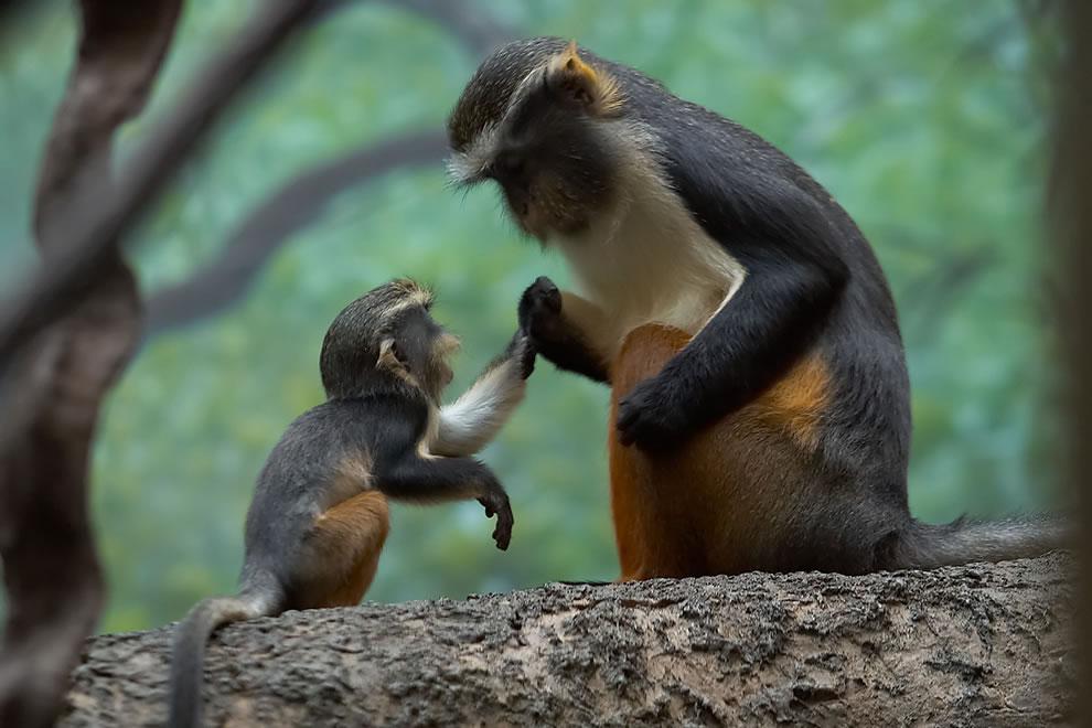 192 Животный мир: Мамина любовь
