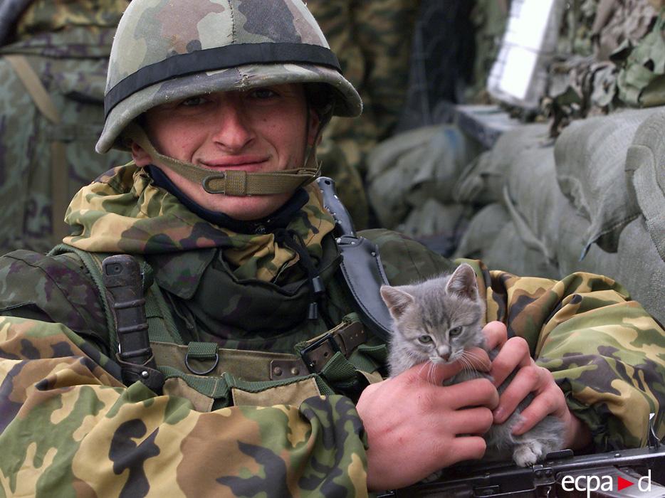 1930 Кошки на войне