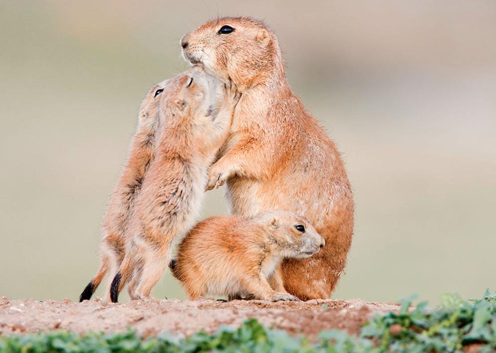201 Животный мир: Мамина любовь