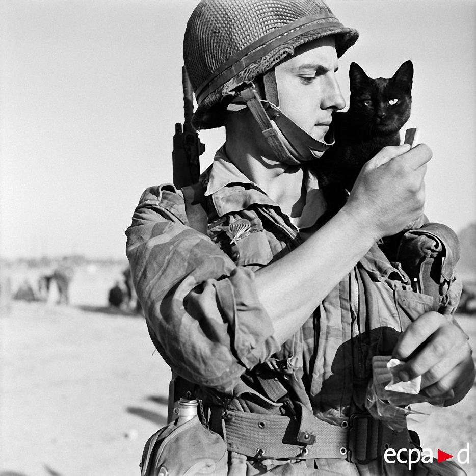 2028 Кошки на войне
