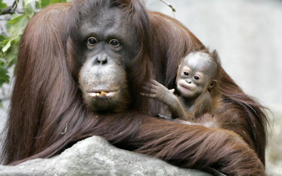 212 Животный мир: Мамина любовь