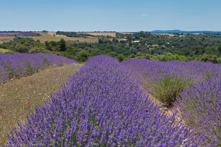 2128 А в Провансе лавандовые поля цветут