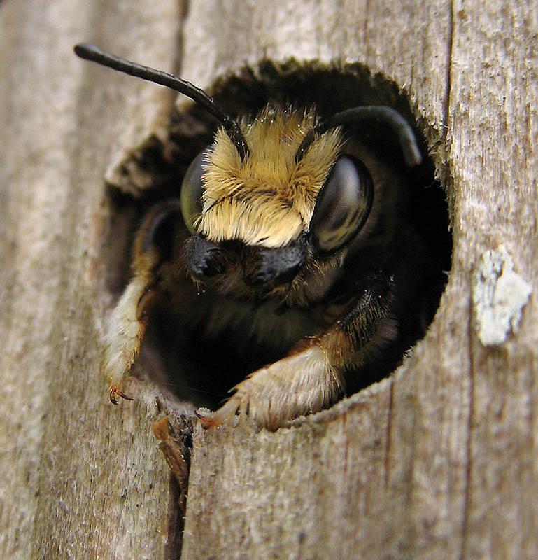 2129 Добро пожаловать в пчелиный отель!