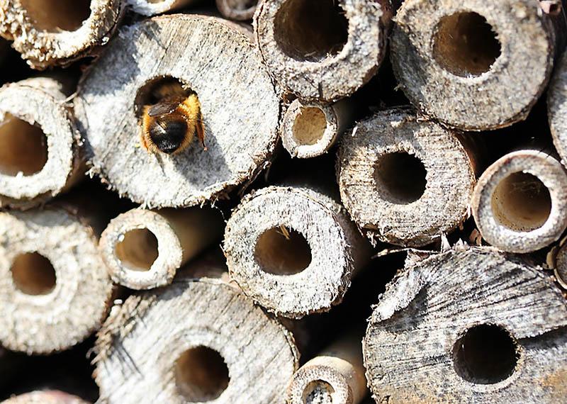 2221 Добро пожаловать в пчелиный отель!