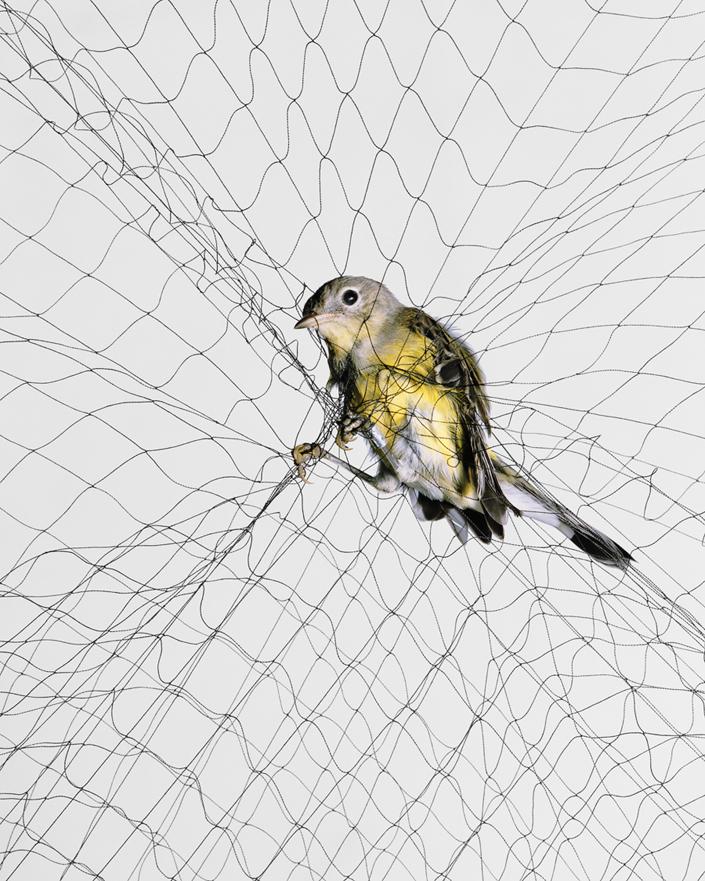 240 Доставка птицы