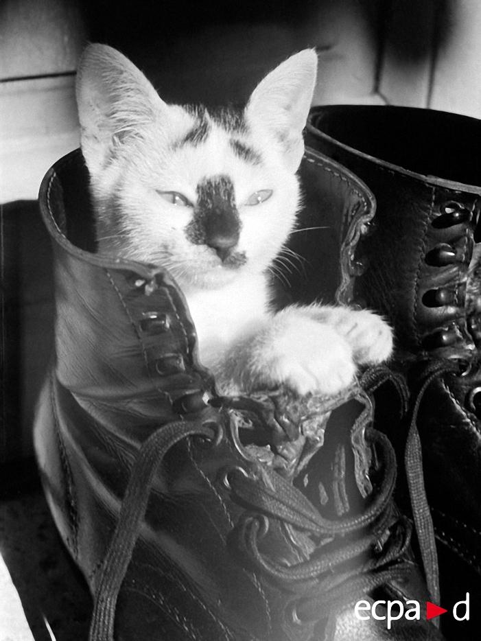 2422 Кошки на войне