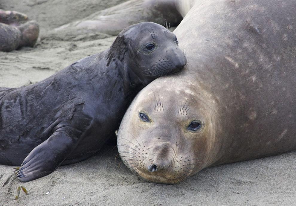 261 Животный мир: Мамина любовь