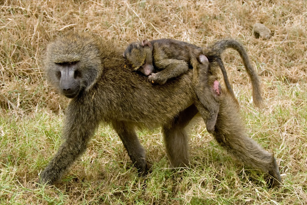 271 Животный мир: Мамина любовь