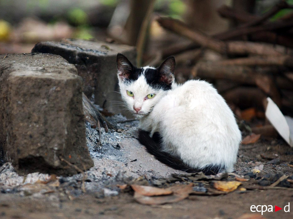 3015 Кошки на войне