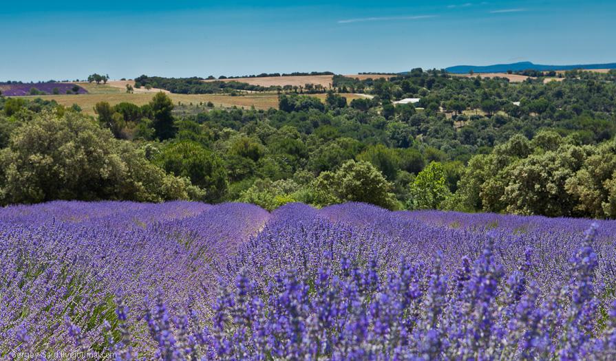 3101 А в Провансе лавандовые поля цветут