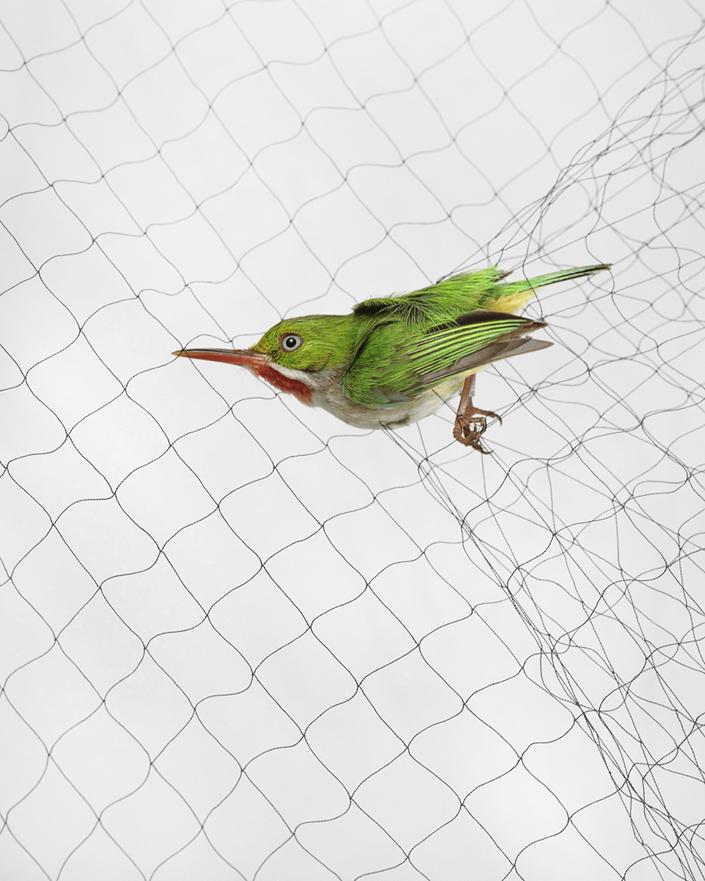 329 Доставка птицы