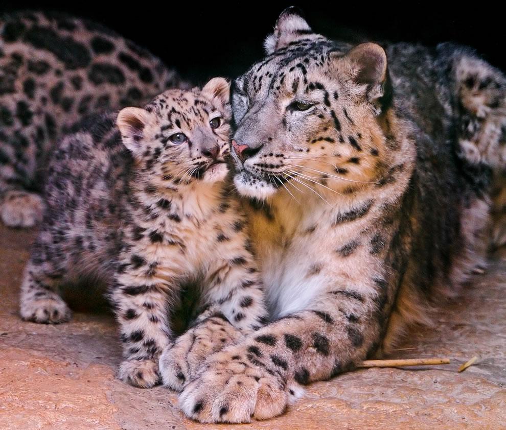 34 Животный мир: Мамина любовь