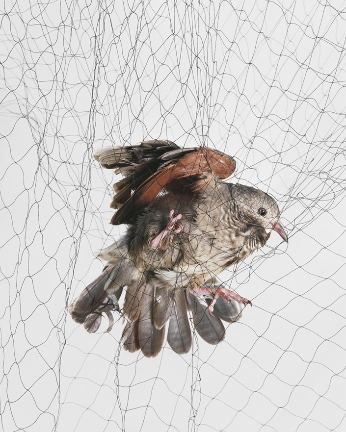 420 Доставка птицы