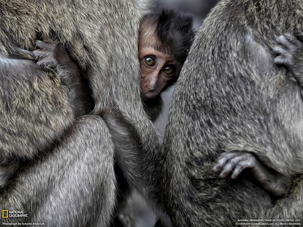 43 990x742 Обои для рабочего стола от National Geographic за июнь 2012