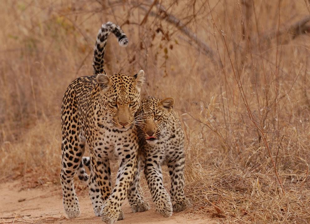 44 Животный мир: Мамина любовь