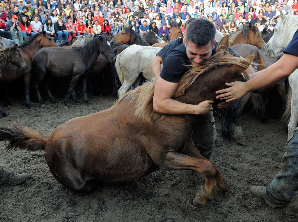 Стрижка диких лошадей