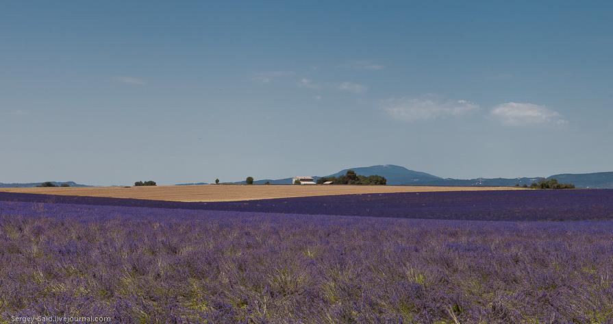 458 А в Провансе лавандовые поля цветут