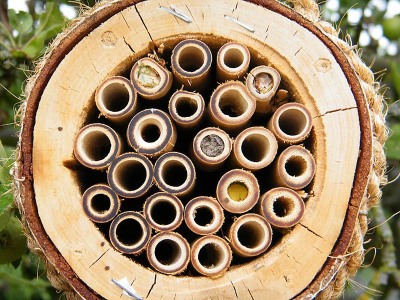 459 Добро пожаловать в пчелиный отель!