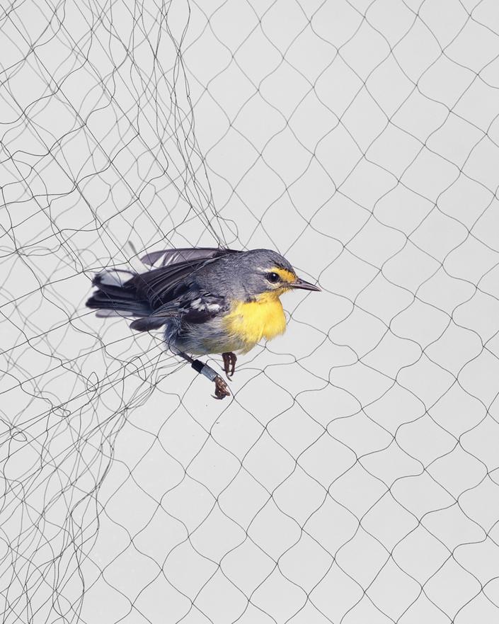 517 Доставка птицы