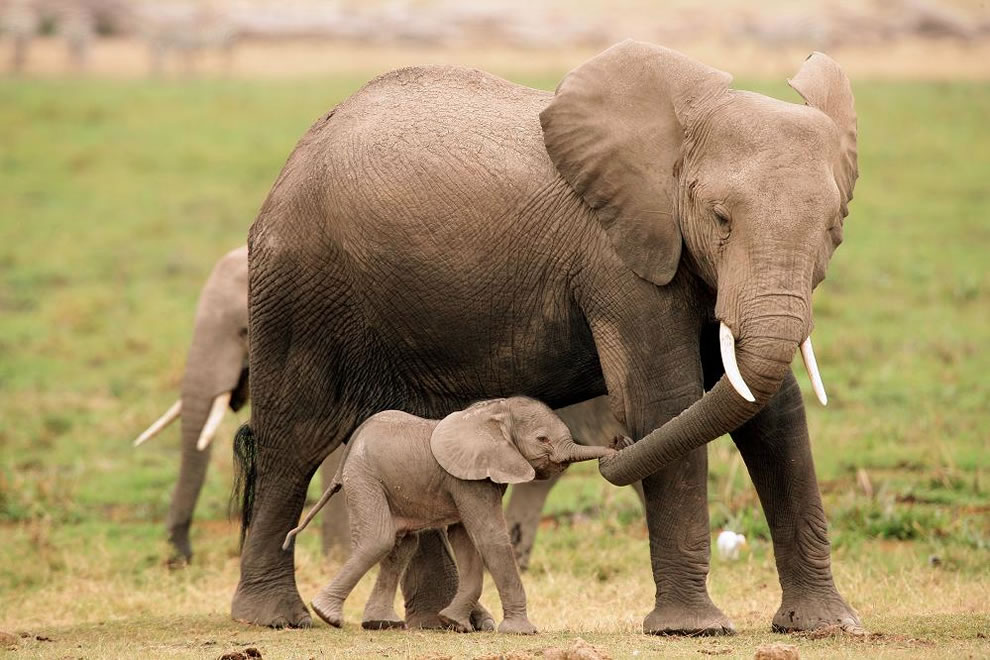 54 Животный мир: Мамина любовь