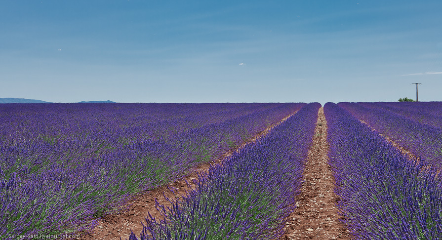 542 А в Провансе лавандовые поля цветут