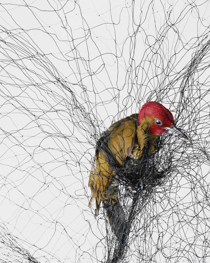 616 Доставка птицы