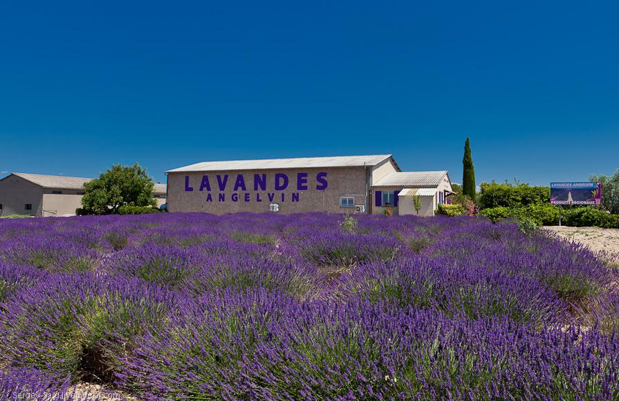 636 А в Провансе лавандовые поля цветут