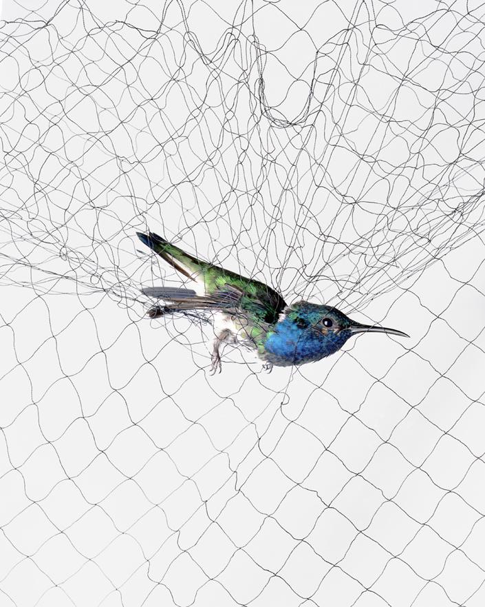 716 Доставка птицы