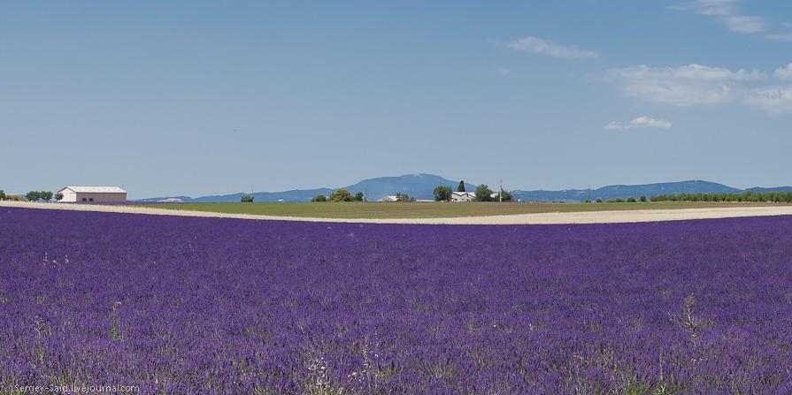 734 А в Провансе лавандовые поля цветут