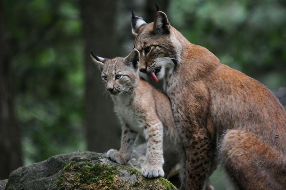 74 Животный мир: Мамина любовь