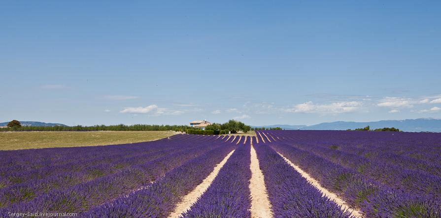 834 А в Провансе лавандовые поля цветут