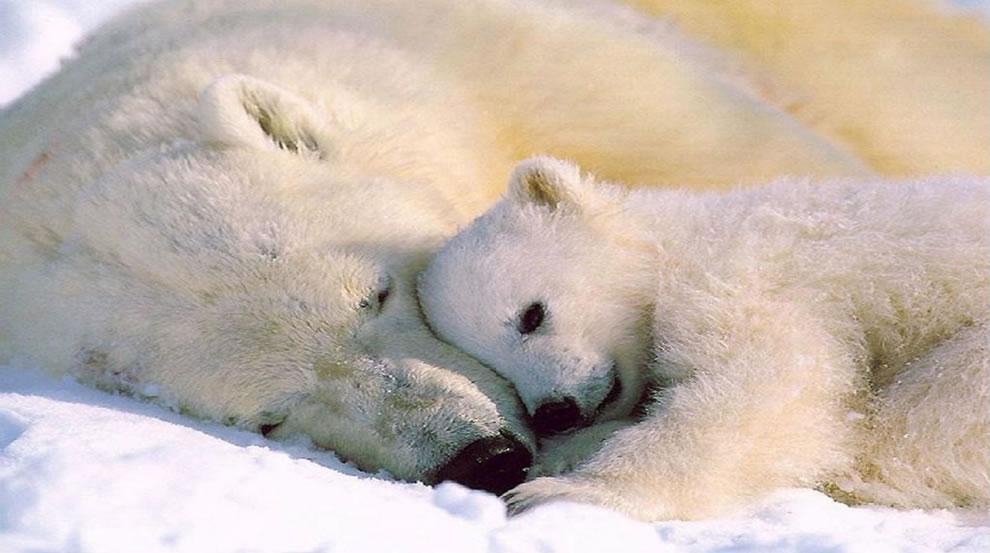 84 Животный мир: Мамина любовь