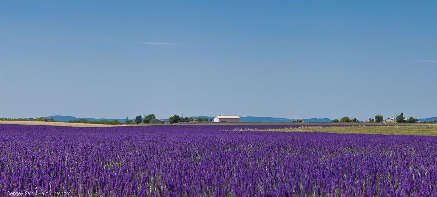 932 А в Провансе лавандовые поля цветут