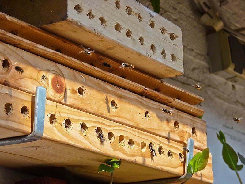 933 Добро пожаловать в пчелиный отель!