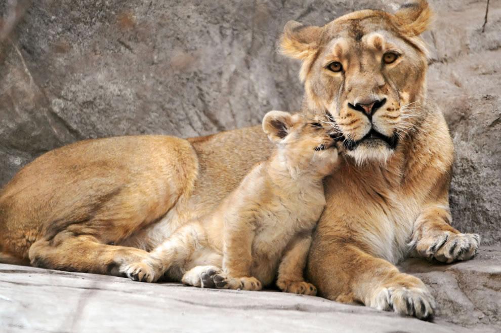 94 Животный мир: Мамина любовь