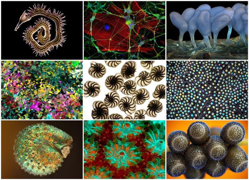 BIGPIC18 Под микроскопом