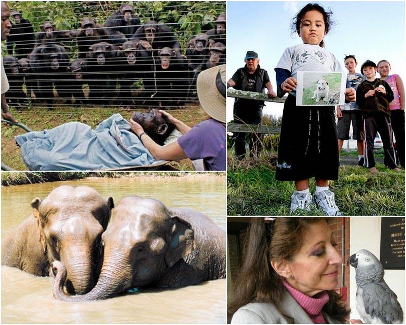 BIGPIC2214 Несколько очевидных доказательств того, что у животных есть душа