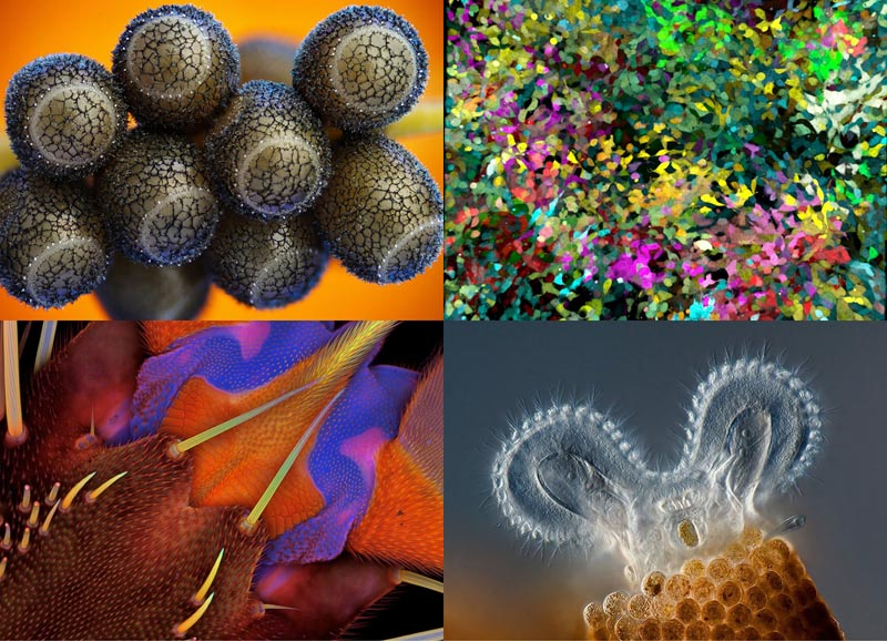 Конкурс микрофотографии Olympus BioScapes 2012