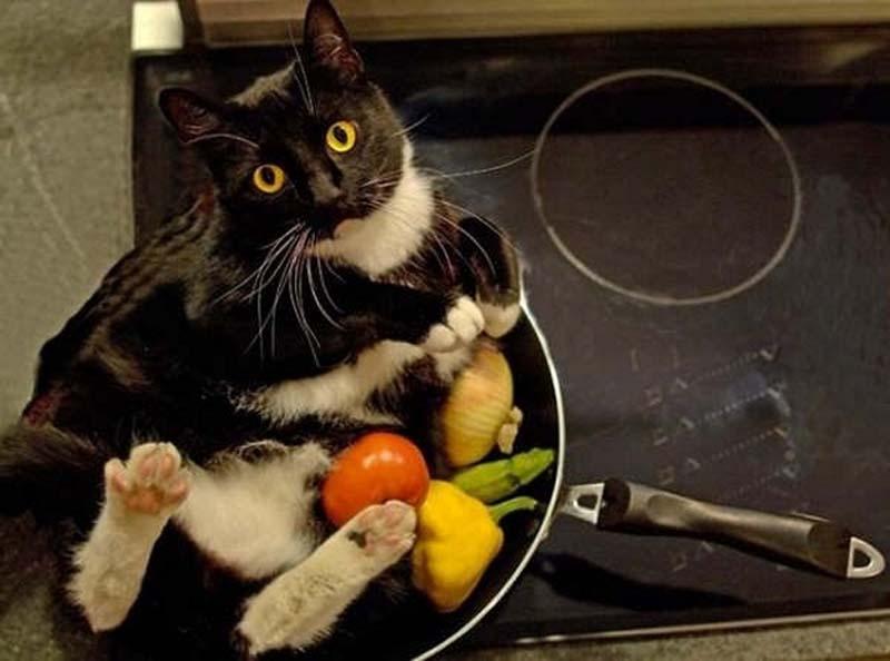 почему у кошки неприятный запах изо рта