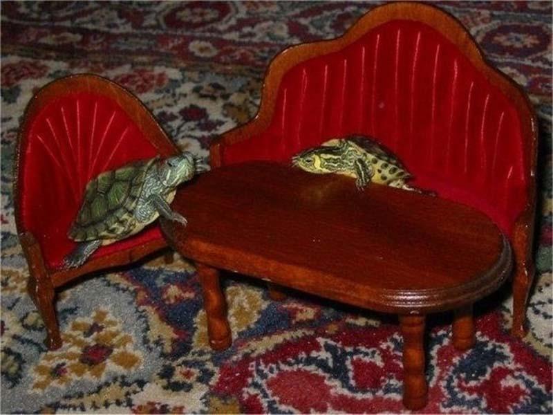 CatsVsTurtles 7 Чем черепахи лучше кошек