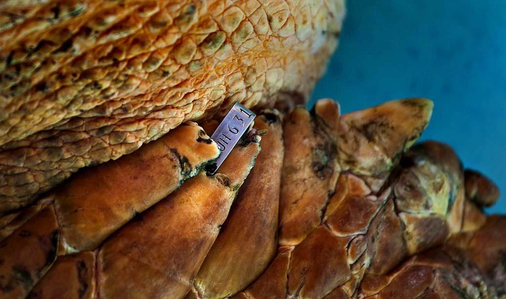 SeaTurtle 4 Головастая морская черепашка возвращается домой