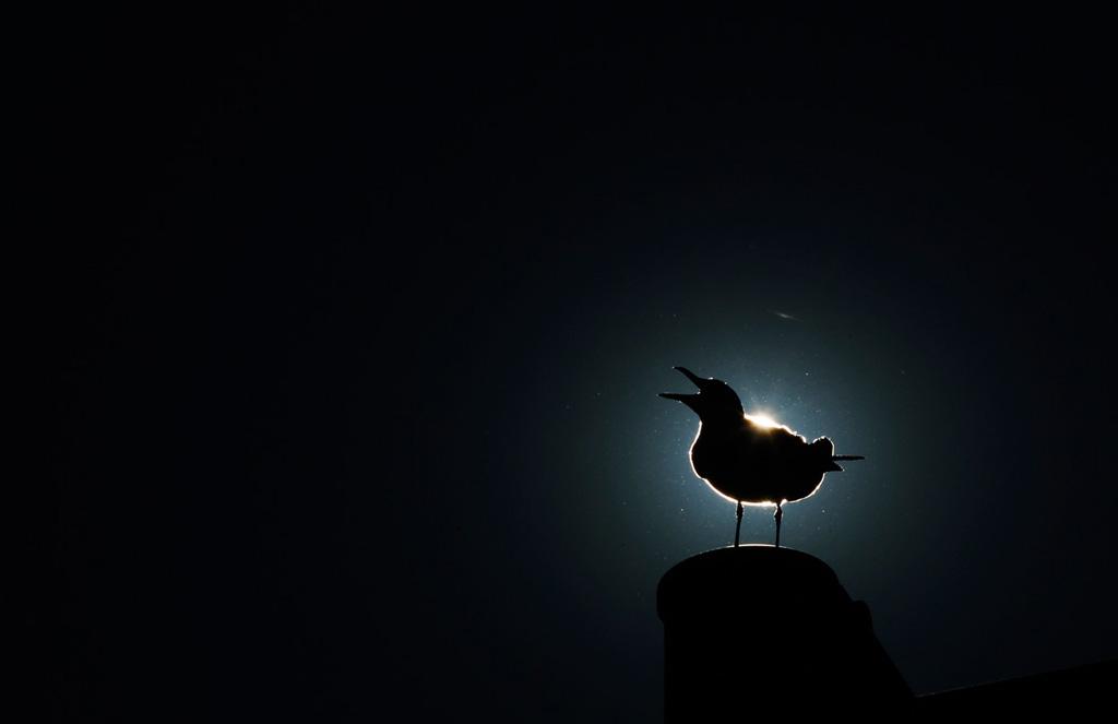 Silhouette 24 Силуэты в новостных фотографиях со всех уголоков мира