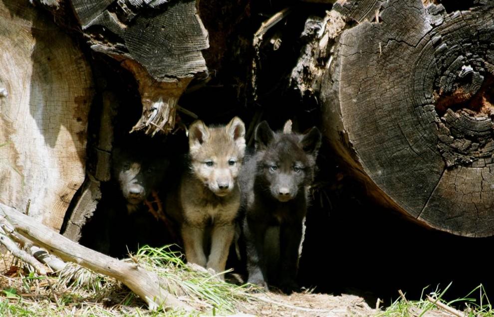 animals 17 Братья наши меньшие
