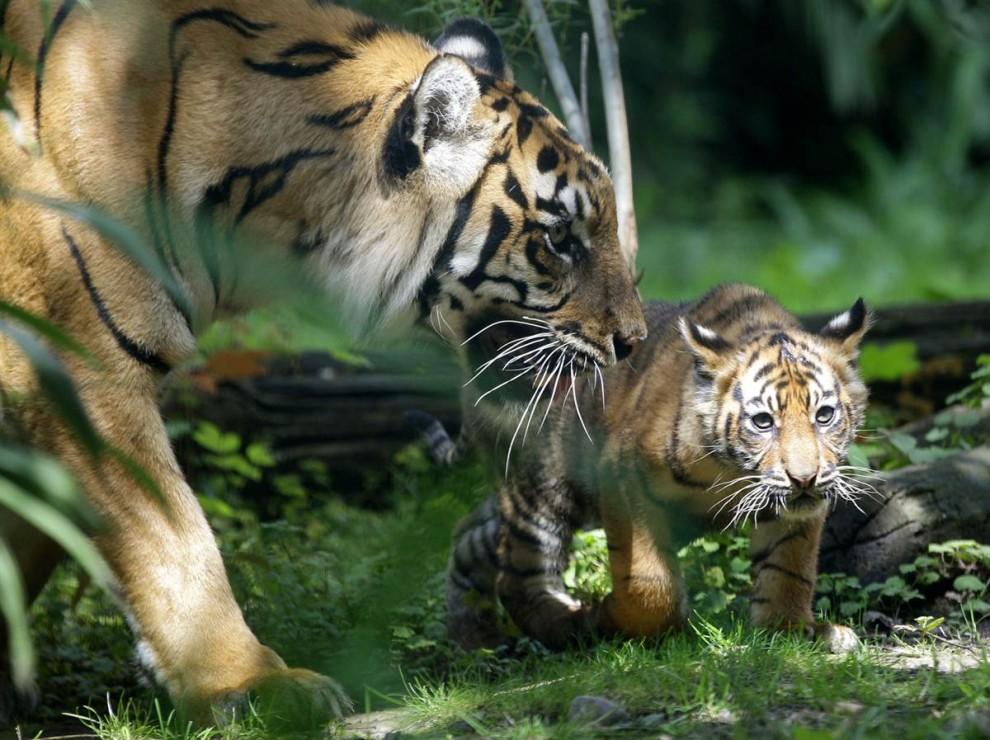 animals 6 Братья наши меньшие
